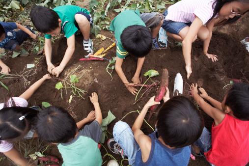 planting spring garden