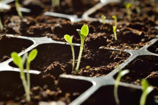 seeds starters spring garden