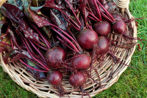 growing beets