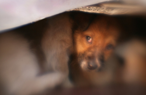 dog hides