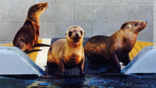 Hoppie with friends at the Marine Mammal Center