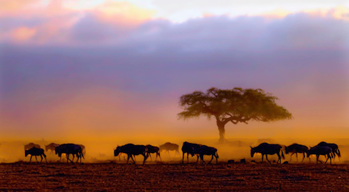 kenya at dawn