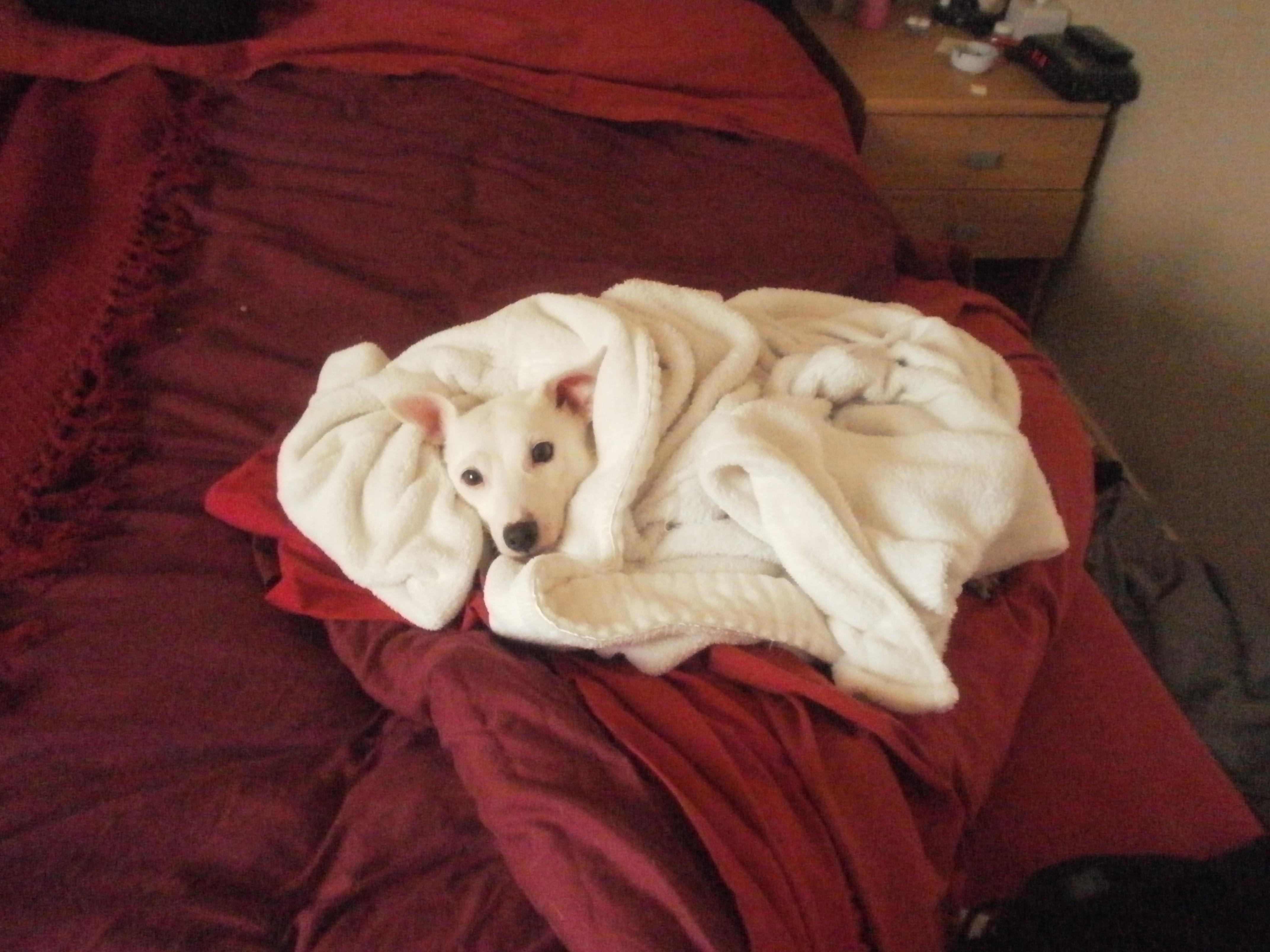 10 best and worst things about puppies care2 causes
