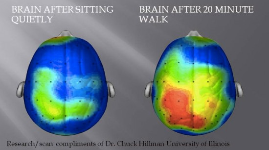 brain on a walk
