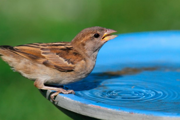 A clean, well-maintained bird bath helps prevent dehyrdration