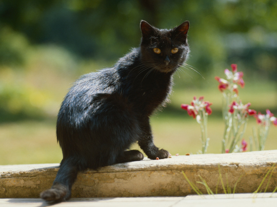 black cat outside