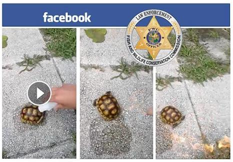 FWC pic on tortoise abuse