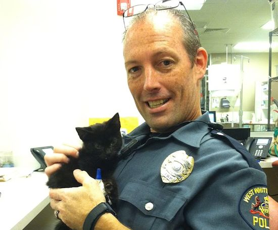 Officer visits the kitten he saved