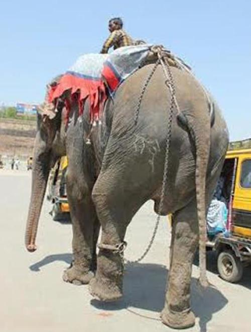 raju in bondage, used for begging from tourists