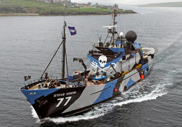The Steve Irwin, one of the Sea Shepherd's existing fleet.  Photo credit: Sea Shepherd Conservation Society Facebook page
