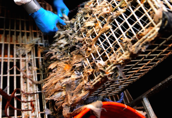 Clogged Sewers Drive Minnesota City To Sue Major Flushable Wipes ...