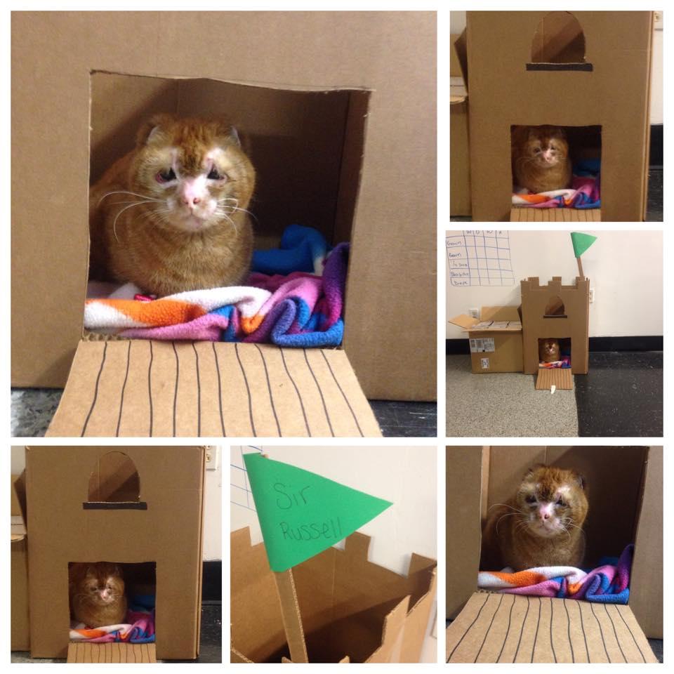 Russel cat