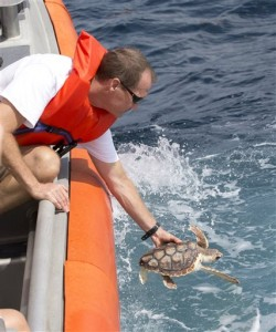 David Anderson, a Marine Turtle Specialist at the Gumbo Limbo Nature Center, releasing a rehabilitated Loggerhead post-hatchling sea turtle from a U.S. Coast Guard vessel. Photo Credit: AP/Wilfredo Lee