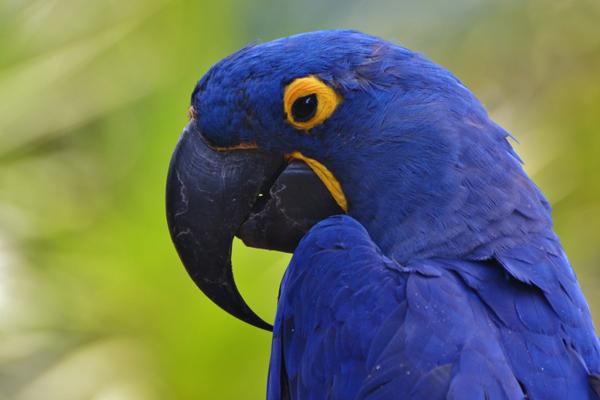 ¿Qué comen los pájaros? -