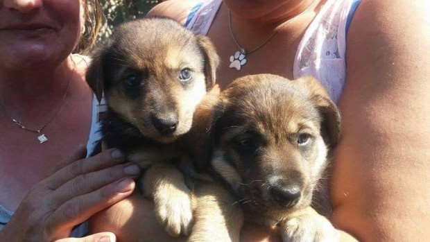 Rescued puppies in Bosnia