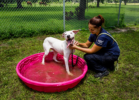 dog-hog-rescue-in-pool