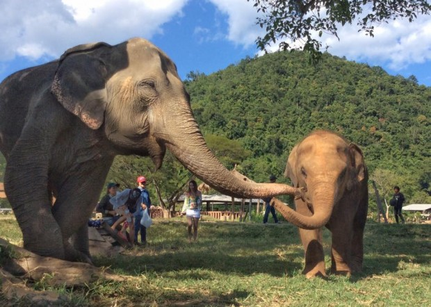 elephant nanny kisses