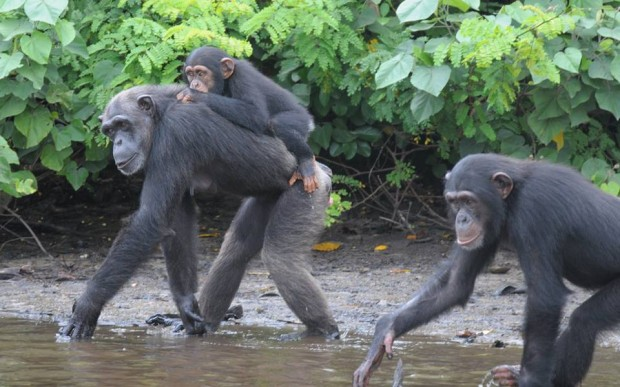 35-year-old Anita can be seen here toting her 3 year old son and closely followed by her 9 year old daughter. This mom entered the testing program in 1982 and was put under anesthesia 300 times!