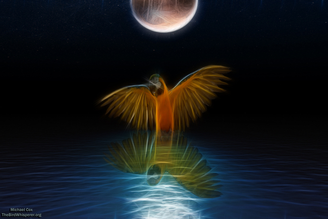 A painting of a parrot under the moon.