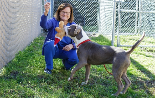 Dr. Julie Levy, the study's lead author, plays with a dog at Alachua County Animal Services. Photo credit: Mindy Miller