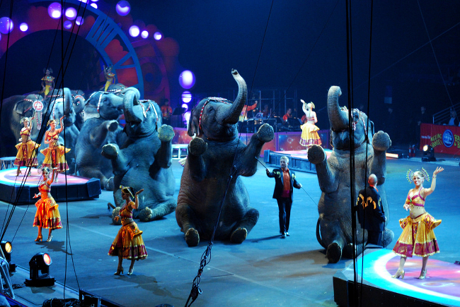 Elephants performing in a circus ring.
