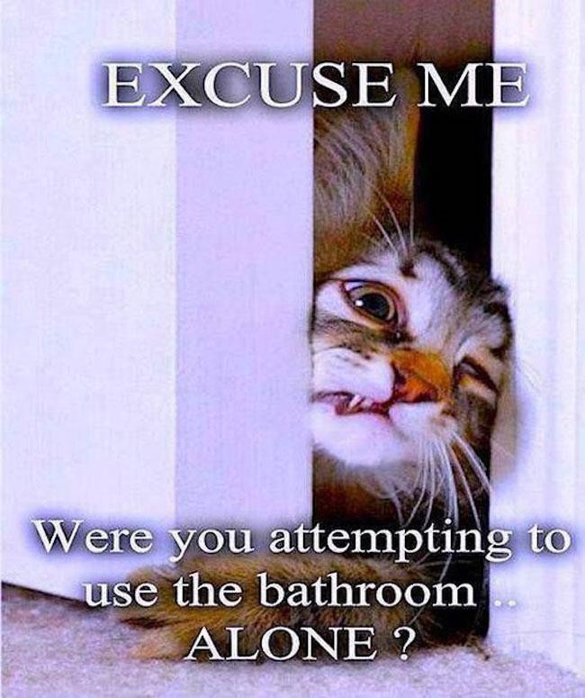 funny-cat-bathroom-meme-pics-photos