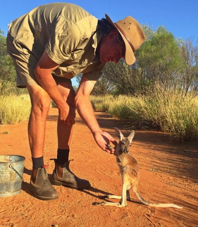 Baby Kangaroo Hero's Amazing Role as 'Mum'