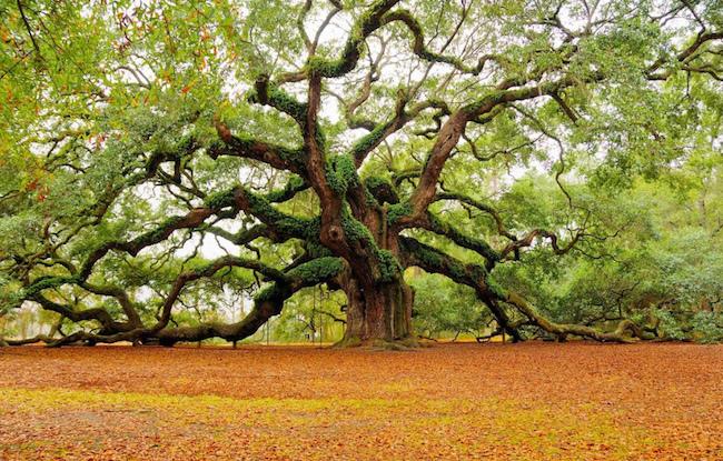 50 Benefits of Trees