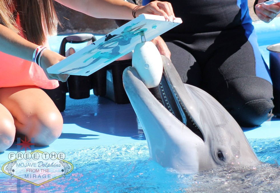 Dolphin paints at Mirage Hotel courtesy Free the Mohave Dolphins