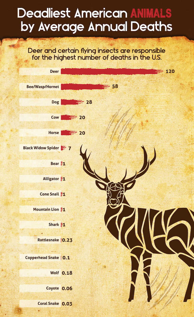 deadliest-american-animals