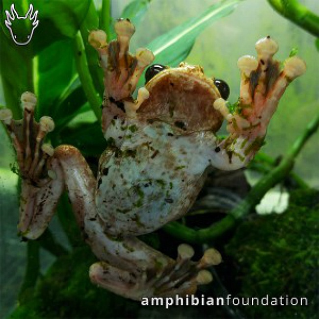 Photo Credit: The Amphibian Foundation   Photo Credit: The Amphibian Foundation