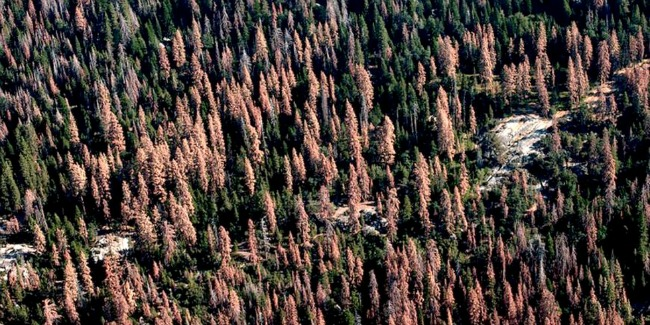 Dead and dying trees on forest lands in California, August 2016. Photo Credit: USFS Region 5 Flickr