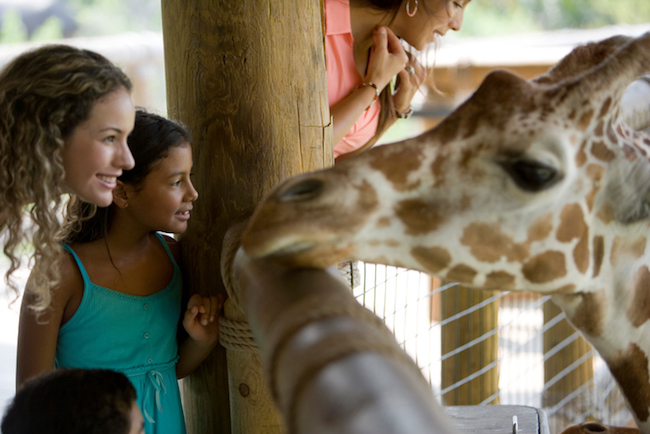 People standing in front of giraffe