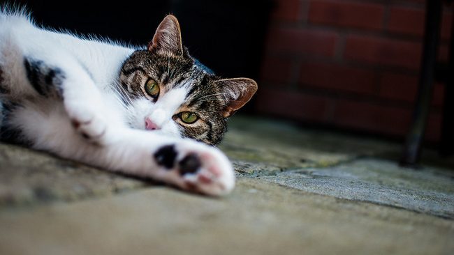 A cat sprawled out on the ground, reaching a paw toward the camera.