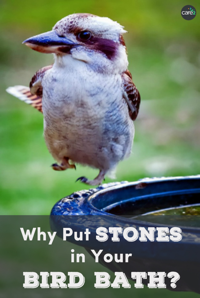 Putting stones in your bird bath could help prevent a bird from drowning.