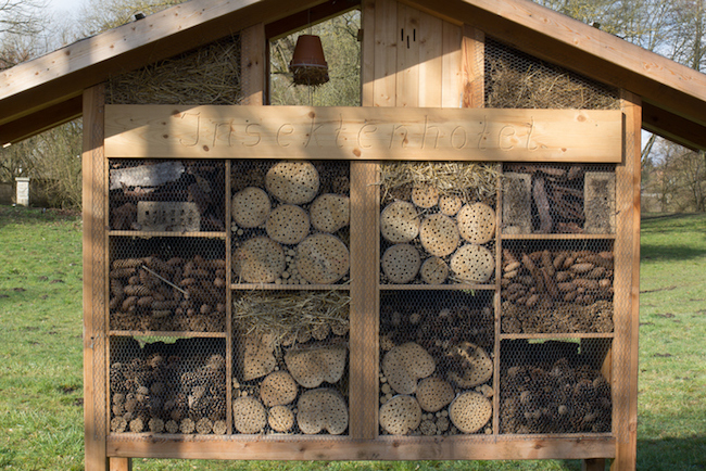 You can build a DIY bee hotel right in your backyard.
