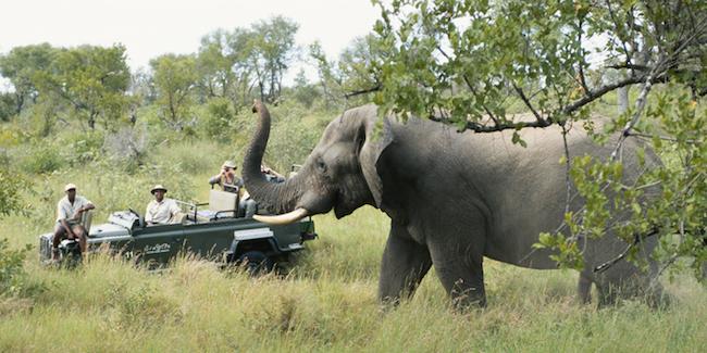 safari and elephant