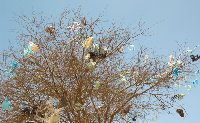 plastic-bags-in-tree