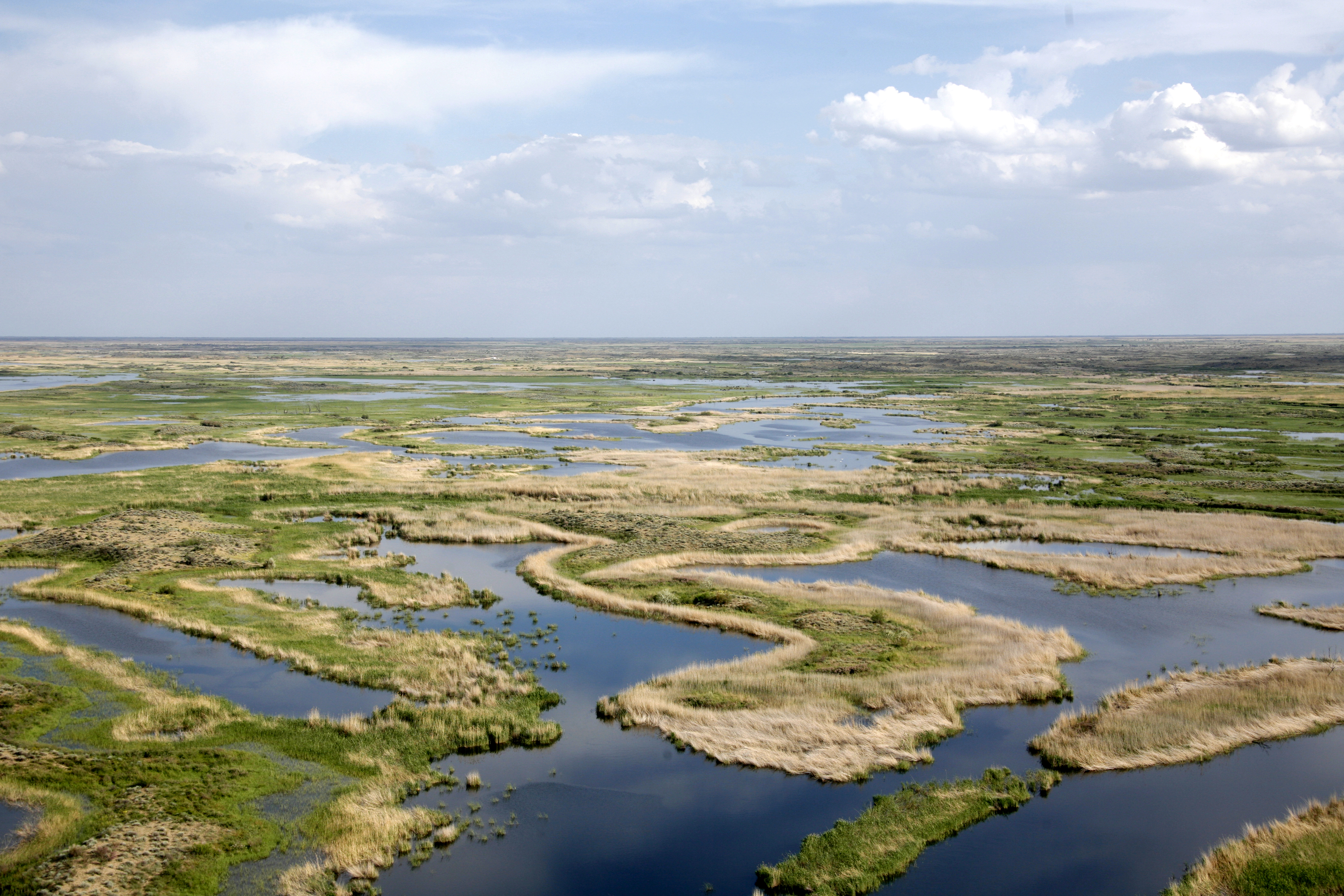 Flooded dunes with reedbeds and tugai (_) WWF-Russia