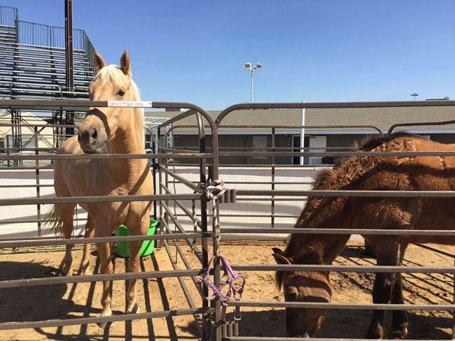 Evacuated Horse s OC Fairgrounds CREDIT In Defense of Animals_preview