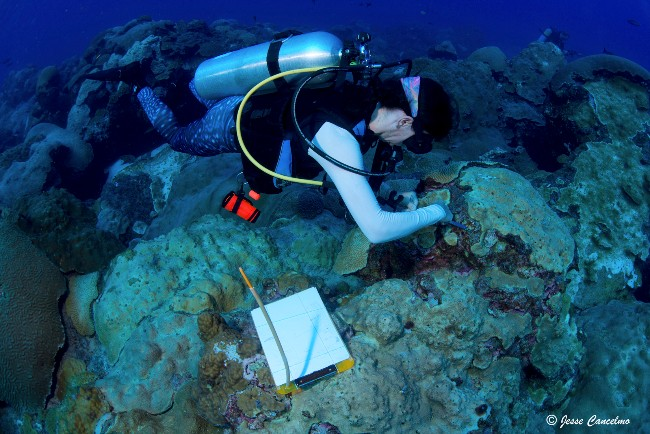 Rice University marine biologist Adrienne Correa taking samples at a Flower Garden Banks reef in 2016.   Photo credit:  Rice University/Jesse Cancelmo