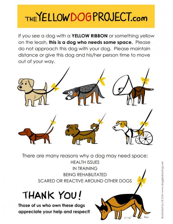What To Do If You See A Yellow Ribbon On A Dog's Leash