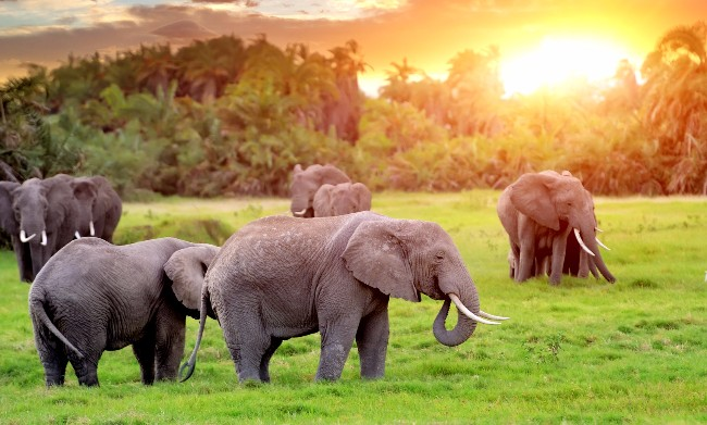 Elephants roaming free and happy, as they should be.   Photo credit: Thinkstock