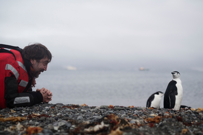 Javier Bardem and chinstrap penguin
