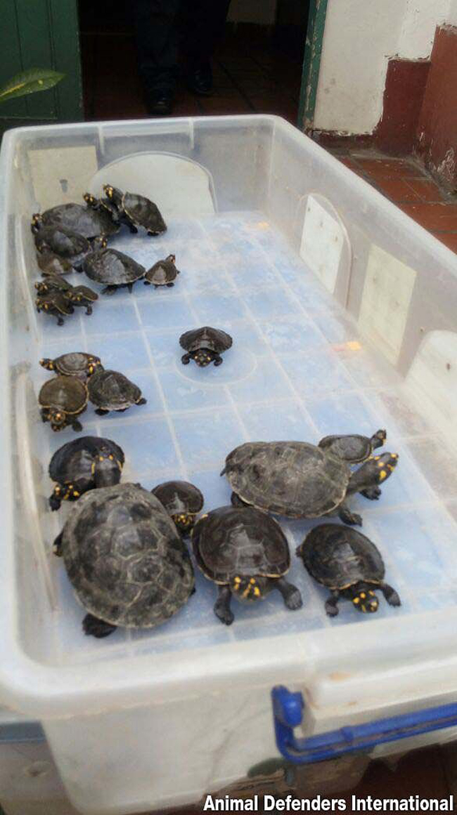 3_Turtles_before_release