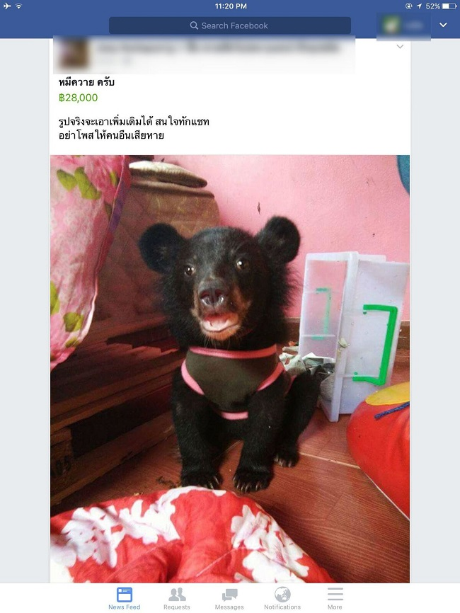 Endangered Animals Offered for Sale on Facebook in Thailand