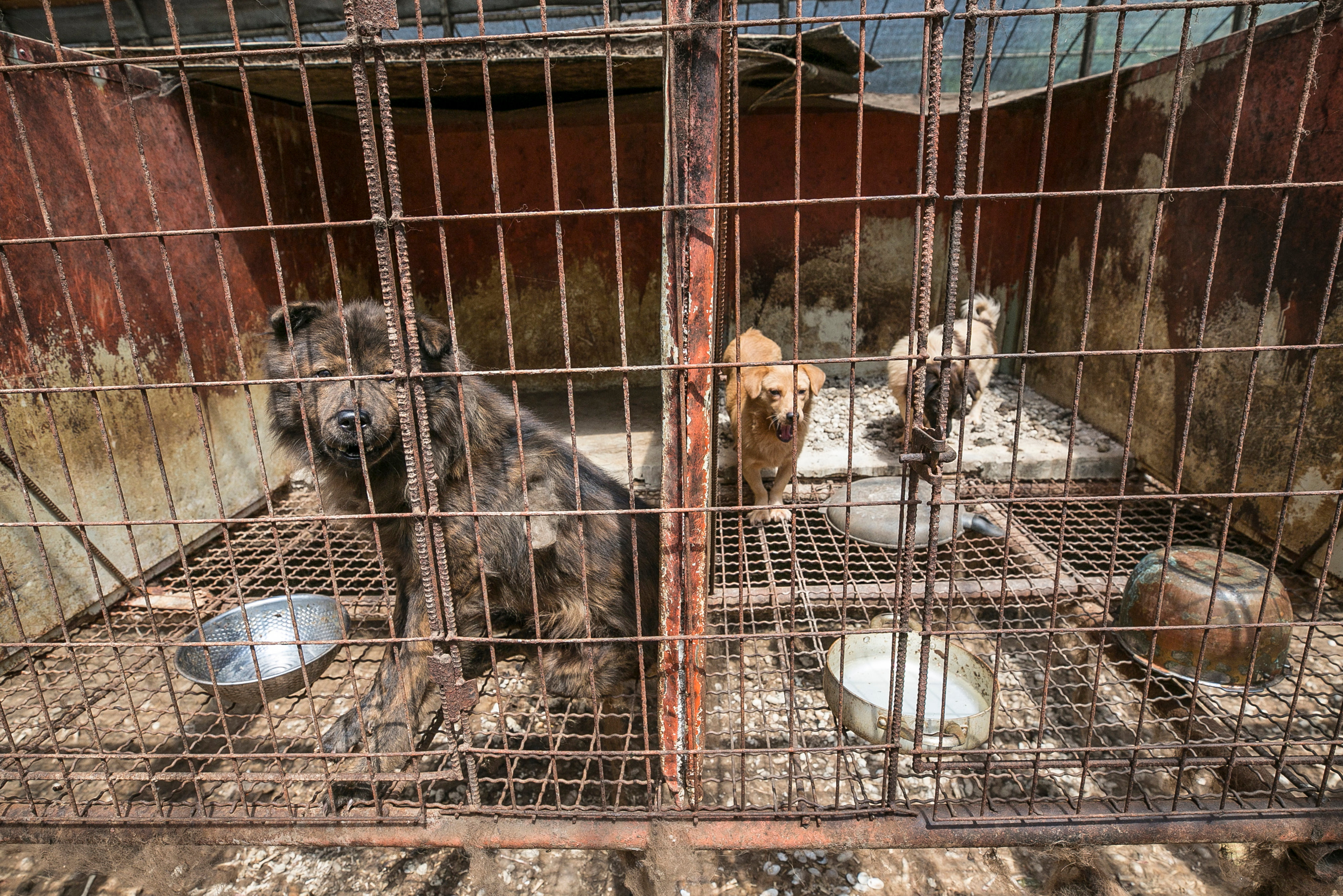 South Korea Dog Meat Farm 13