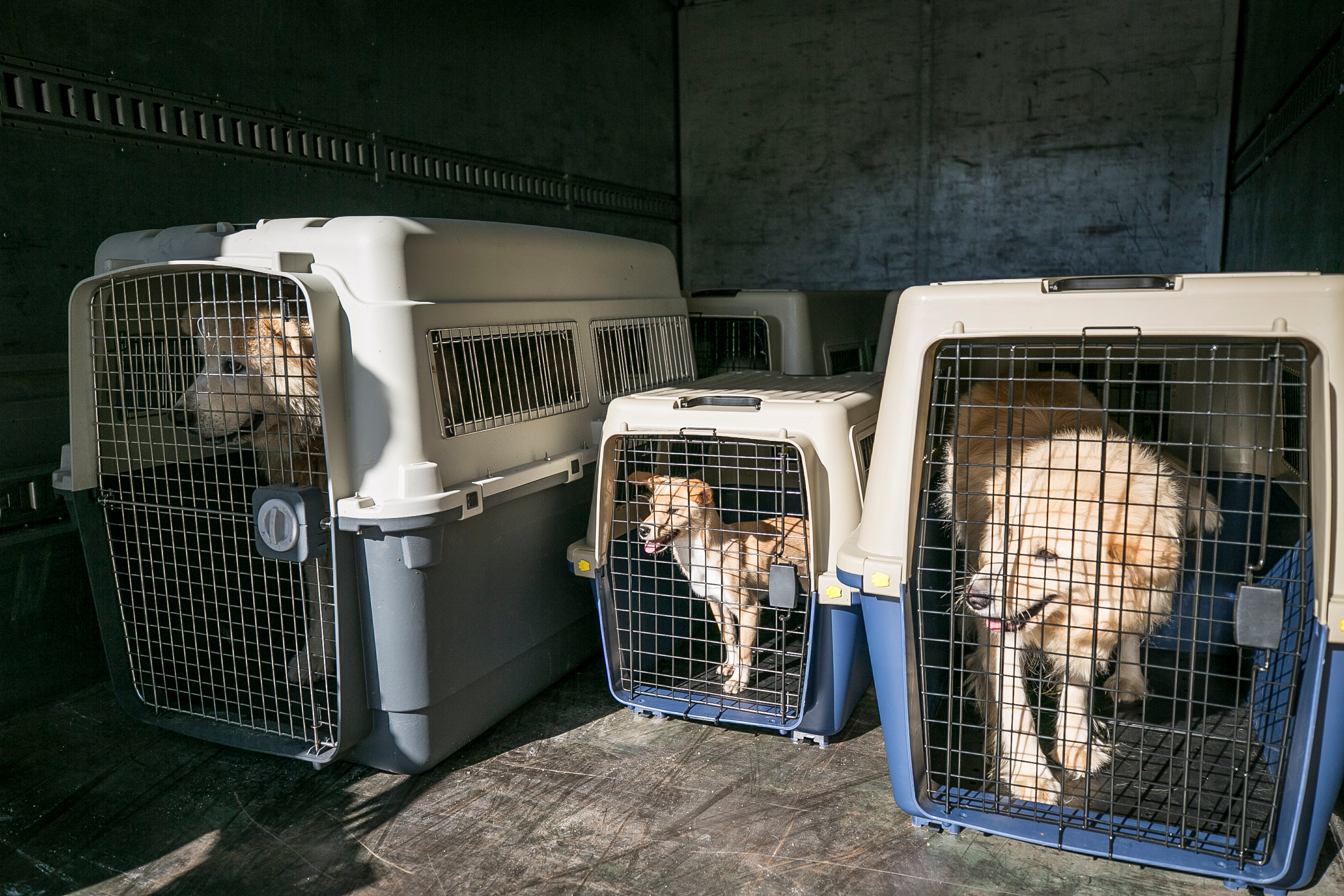 South Korea Dog Meat Farm Rescue (Farm 13)