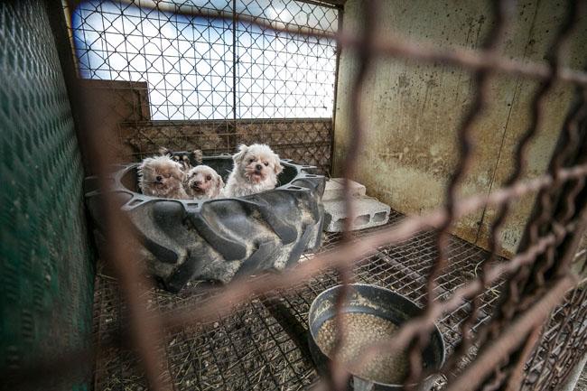 South Korea Dog Meat Farm (Farm 14)