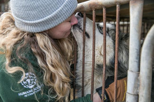 South Korea Dog Meat Farm Rescue (Farm 14)